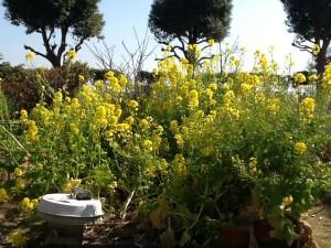 庭園の花⑦