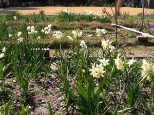 庭園の花①