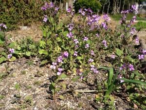庭園の花③