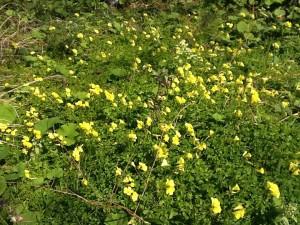 庭園の花⑨