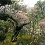 太宰府別荘 自然庵庭園